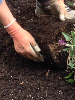 hands in dirt planting