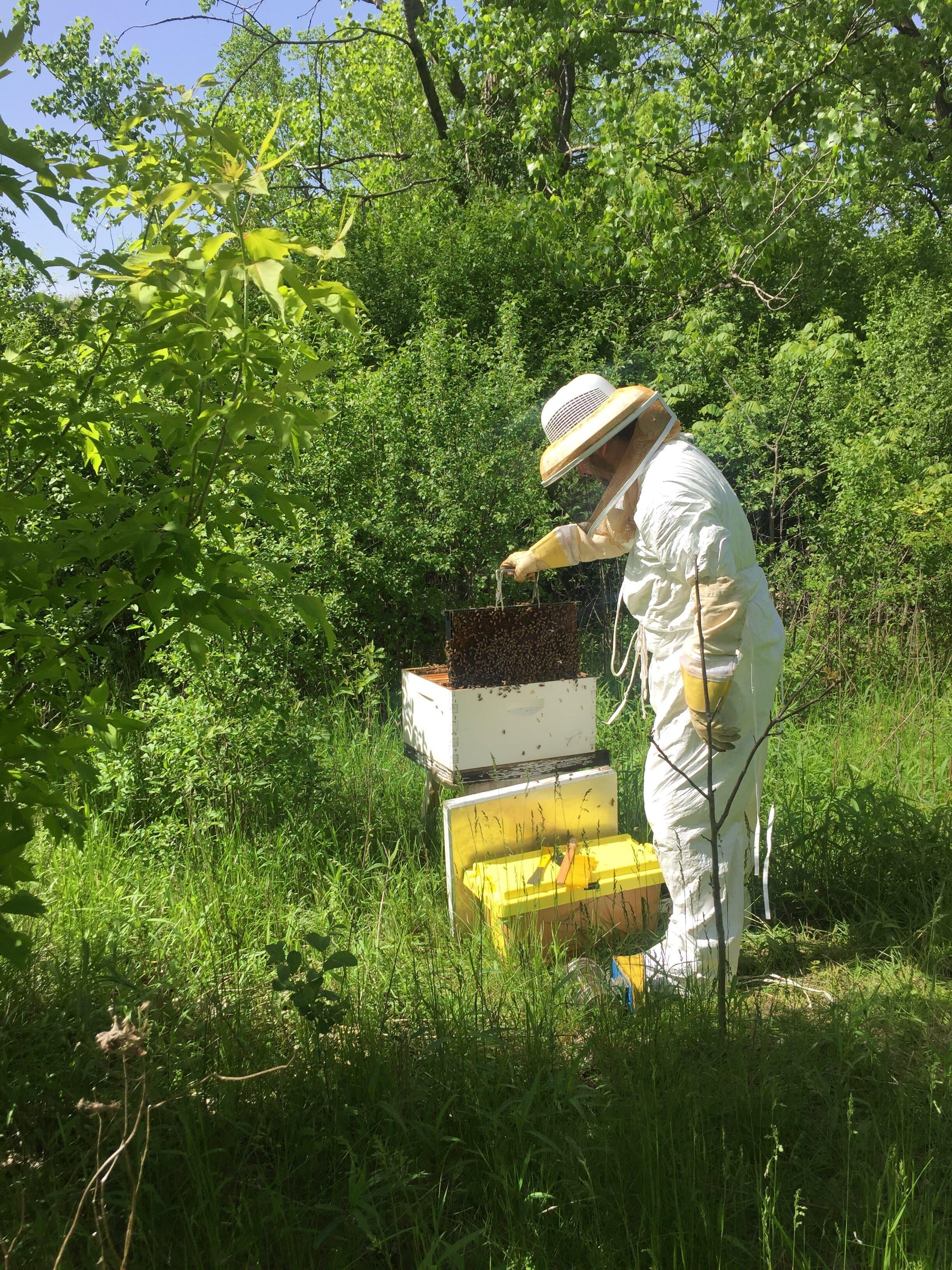 PSC's New Beehive